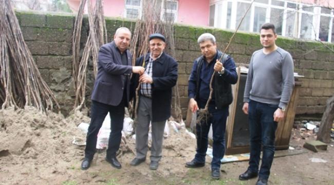 Çan Ziraat Odası, Meyve Fidanı Satışlarına Başladı