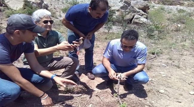 Bozcaada'da 'Sakız Ağacı' Projesiyle Ekonomi Canlanacak!